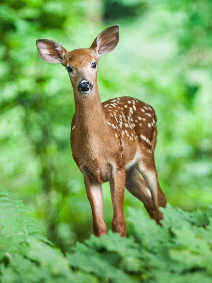 11 отлични ползи от ходенето в гората